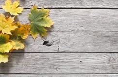 Fall season background, yellow oak leaves royalty free stock photo