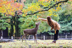 Fall season with beautiful maple color at Nara Park, Japan Stock Photos
