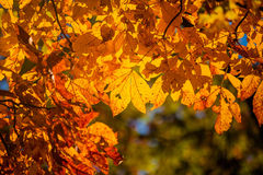 Fall season. Beautiful trees and nature Stock Images