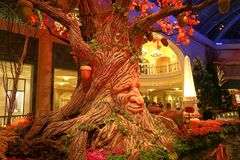 Fall season in Bellagio Hotel Conservatory & Botanical Gardens Royalty Free Stock Photos
