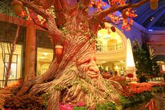 Fall season in Bellagio Hotel Conservatory & Botanical Gardens Royalty Free Stock Image