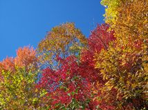 Fall Season Colors. Different colors of trees in the fall Stock Photos