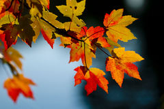Free Fall Season Colors Royalty Free Stock Photography - 3598627