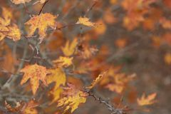 Autumn time background stock images