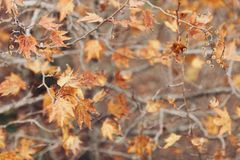 Autumn time background Stock Image