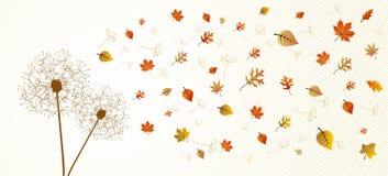 Fall season dandelion tree leaves composition back Stock Images