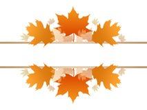 Fall season foliage with blank line. Fall season foliage, Maple and Oak with blank line stock illustration