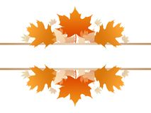 Fall season foliage. Maple and Oak on the text filling space vector illustration