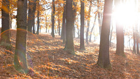 Fall Season in the Forest Royalty Free Stock Photography