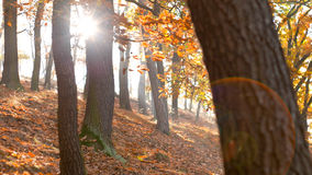 Fall Season in the Forest Stock Image