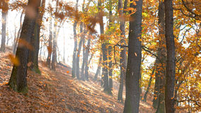 Fall Season in the Forest Stock Photography