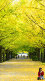 Fall season ginkgo leaves in autumn, Japan Royalty Free Stock Images
