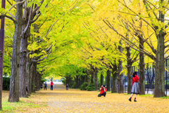 Fall season ginkgo leaves in autumn, Japan Stock Photography