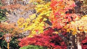 The fall season, Japan stock footage