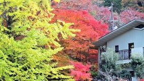 The fall season, Japan stock video