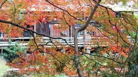 The fall season, Japan stock video footage