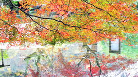 The fall season, Japan (reflection) stock footage