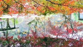 The fall season, Japan (reflection) stock video