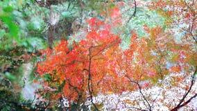 The fall season, Japan(reflection) stock video