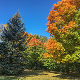 Fall season landscapes Royalty Free Stock Images