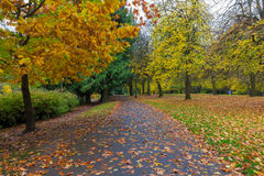 Fall Season at Laurelhurst Park in Portland Oregon. Fall foliage at Laurelhurst Park in city of Portland Oregon during Autumn season Stock Photo