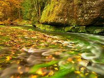 Fall season at mountain river. Green algae in  water, colorful autumn  leaves. Royalty Free Stock Image