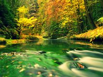 Fall season at mountain river. Green algae in  water, colorful autumn  leaves. Stock Image
