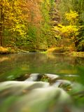 Fall season at mountain river. Green algae in  water, colorful autumn  leaves. Stock Images