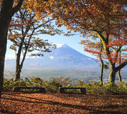 Fall season of Mt. Fuji in Japan with nice yellow color Royalty Free Stock Images