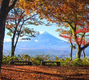 Fall season of Mt. Fuji in Japan with nice yellow color Stock Photo