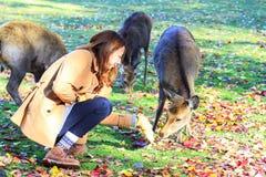 Fall season of Nara city, Japan with nice yellowred color Stock Images