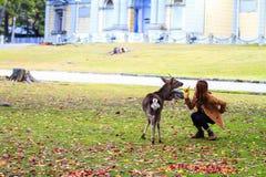 Fall season of Nara city, Japan with nice yellowred color Stock Photos
