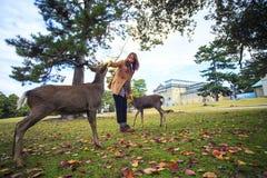 Fall season of Nara city, Japan with nice yellowred color Royalty Free Stock Photo