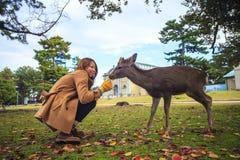 Fall season of Nara city, Japan with nice yellowred color Royalty Free Stock Images
