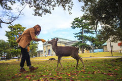 Fall season of Nara city, Japan with nice yellowred color Stock Photography