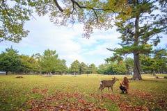 Fall season of Nara city, Japan with nice yellowred color Stock Image