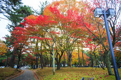 Fall season of Nara city, Japan with nice yellowred color Royalty Free Stock Image