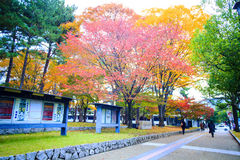 Fall season of Nara city, Japan with nice yellowred color Stock Photo