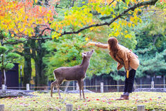 Fall season of Nara with nice maple color Royalty Free Stock Photos