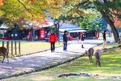 Fall season of Nara with nice maple color Stock Image