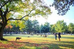 Fall season of Nara with nice maple color Royalty Free Stock Photo