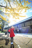 Fall season of Nara with nice maple color Royalty Free Stock Images