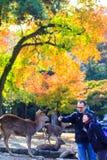 Fall season of Nara with nice maple color Stock Photo