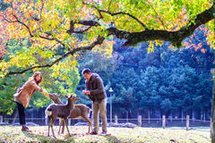 Fall season of Nara with nice maple color Stock Photos