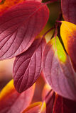Fall season natural colorful background of macro leaves. Royalty Free Stock Photos