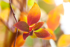 Fall season natural colorful background of macro leaves. Royalty Free Stock Image