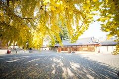 The fall season of Nishi Honganji temple in Kyoto Royalty Free Stock Image
