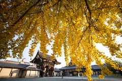 The fall season of Nishi Honganji temple in Kyoto Stock Images