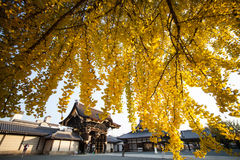 The fall season of Nishi Honganji temple in Kyoto Royalty Free Stock Photo