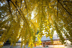 The fall season of Nishi Honganji temple in Kyoto Royalty Free Stock Image